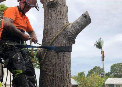 Palm-Tree-Cutting-Nowra