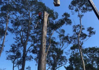 Tree-Cutting-Service-Nowra