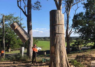 Tree-Felling-Shoalhaven