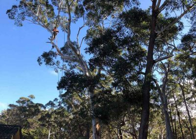 Tree-Removal-Shoalhaven