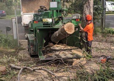 Tree-Services-Nowra