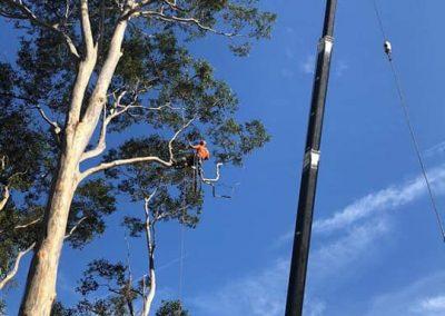 Tree-Services-Shoalhaven
