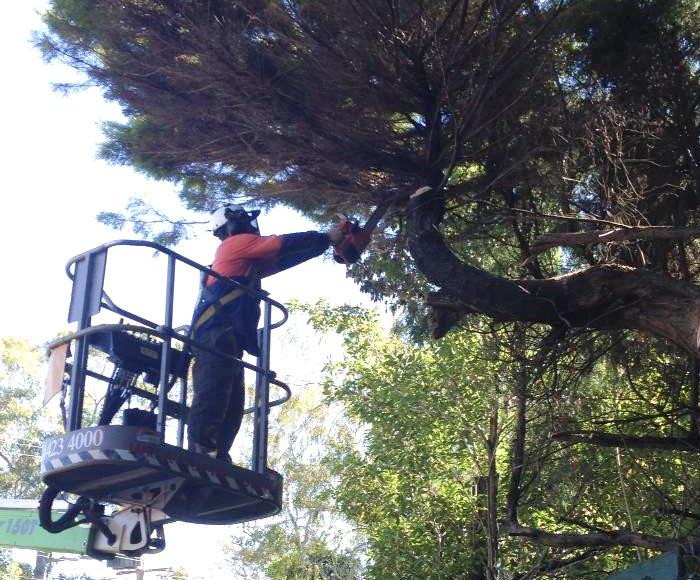 tree services shoalhaven