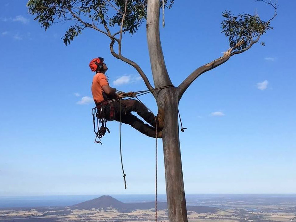 Tree Services Nowra