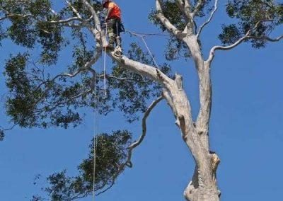 tree-felling-nowra