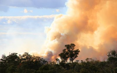 Prepare Now For The Bushfire Season