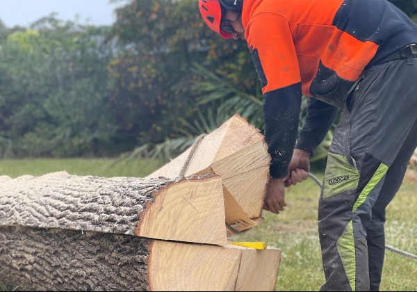 tree removal shoalhaven